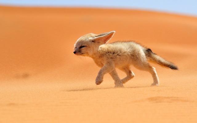 Al BAR del Regno Desert10