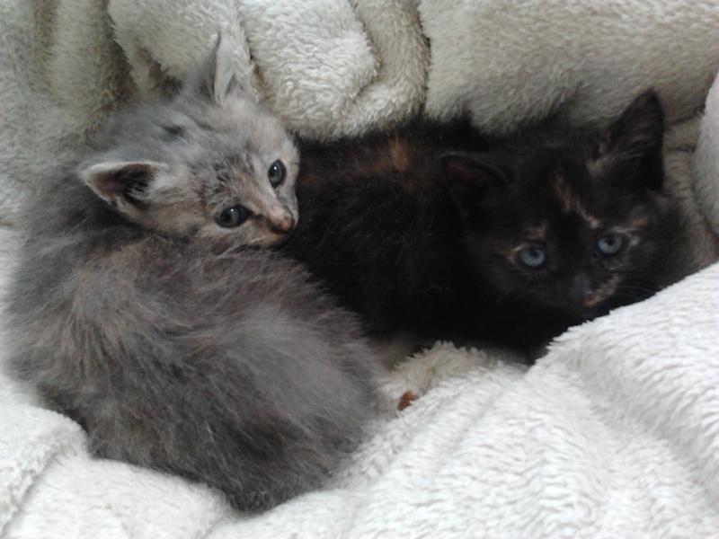 Les chats et chatons que je propose à l'adoption(sous asso) - Page 2 2014-012