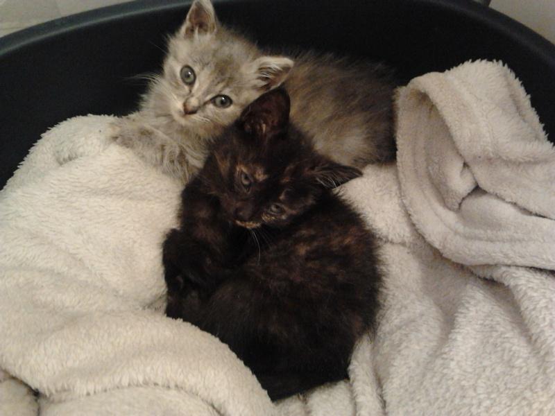 Les chats et chatons que je propose à l'adoption(sous asso) - Page 2 2014-015