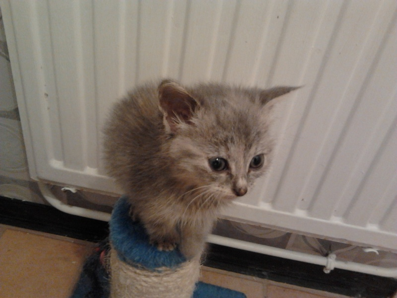 Les chats et chatons que je propose à l'adoption(sous asso) - Page 2 2014-016