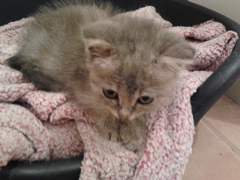 Les chats et chatons que je propose à l'adoption(sous asso) - Page 2 2014-017