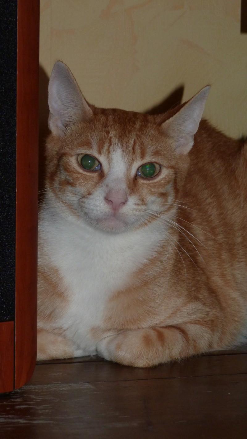 Mfripon, mâle, né en mai 2012 P1010610