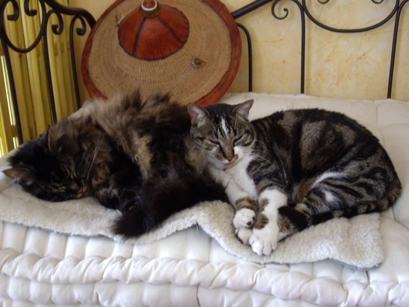 L'art de faire la sieste (par nos amis les chats)  Imgp2610