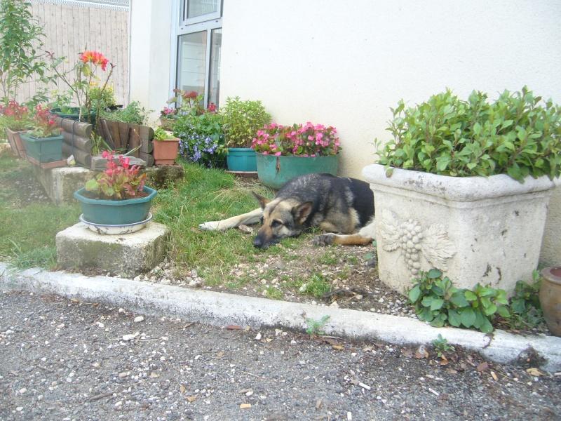 Merci Paulette !!! notre spécialiste es fleurs au refuge P1220113