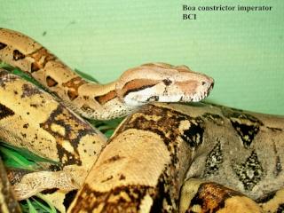 Photos Reptiles Bci_1110
