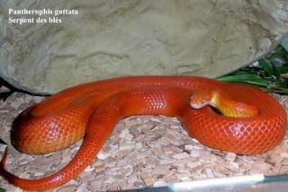 Photos Reptiles Serpen11