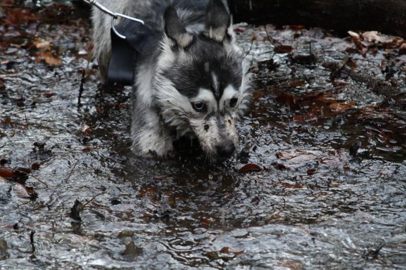 Nos loups grandissent, postez nous vos photos - Page 9 Img_8710