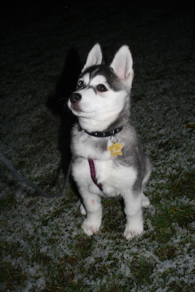 Nos loups grandissent, postez nous vos photos - Page 9 Img_9610