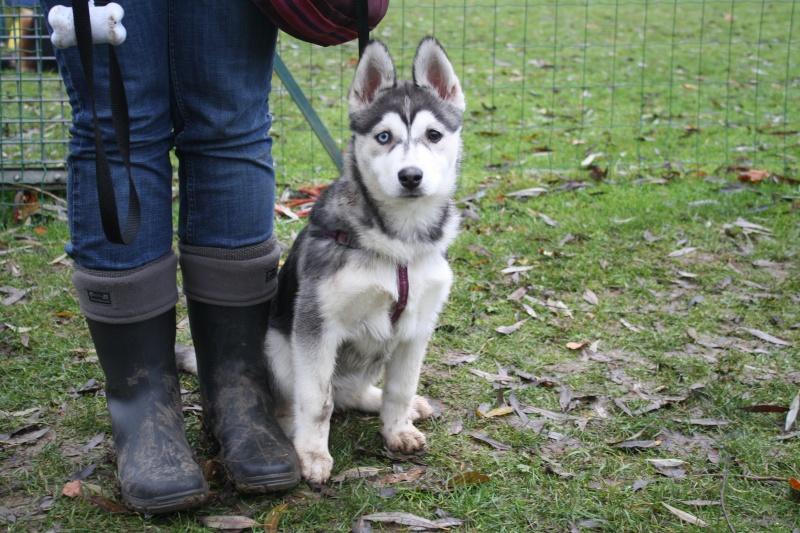 Nos loups grandissent, postez nous vos photos - Page 9 Img_9810