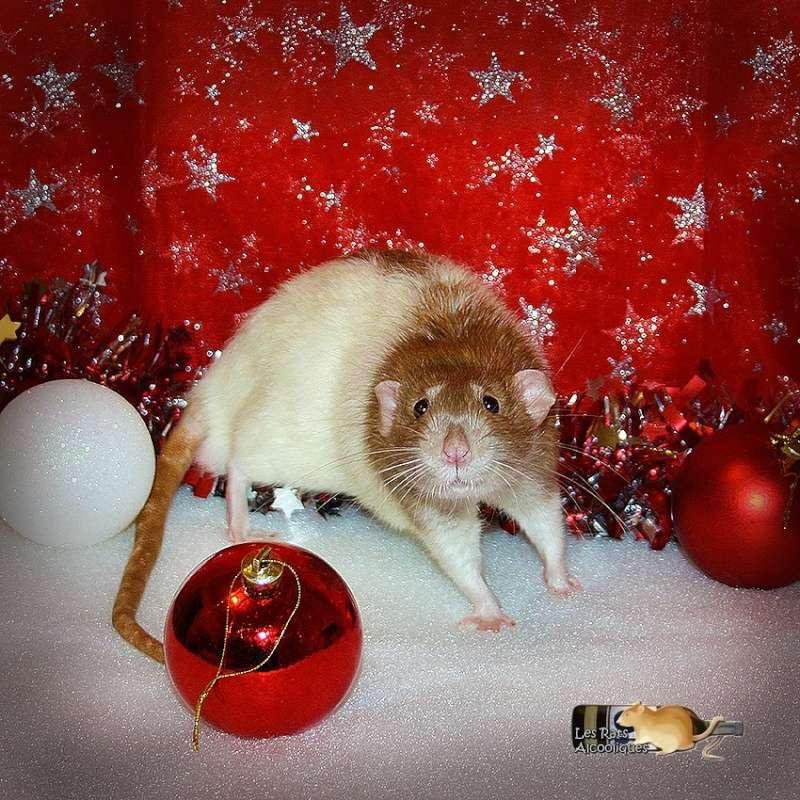 [31] ALC Arack x ALC Smirnoff - 14 ratons, le 16/12/2014 Img_9110