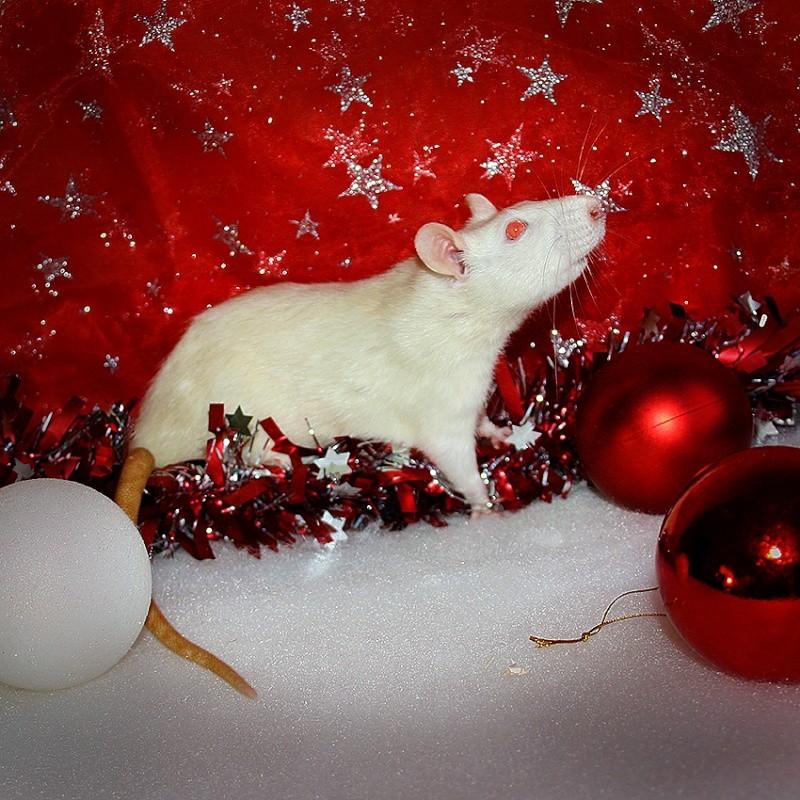 [31] ALC Arack x ALC Smirnoff - 14 ratons, le 16/12/2014 Img_9210