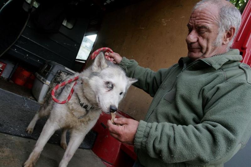Maltraitance sur des huskies 10393110