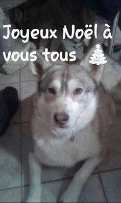 SHASTA, Husky (f) 2 ans sauvée de Roumanie ASSO26  ADOPTEE 10406511