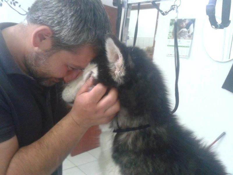 LUNA Husky 4/5 ANS pas ok chien URGENCE ROUMANIE  ADOPTEE 10500410