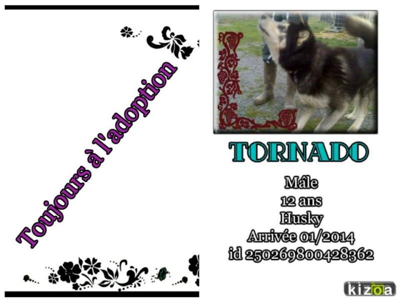 Tornado husky (m) 26 octobre 2002 REFU22 reste au refuge 10537110