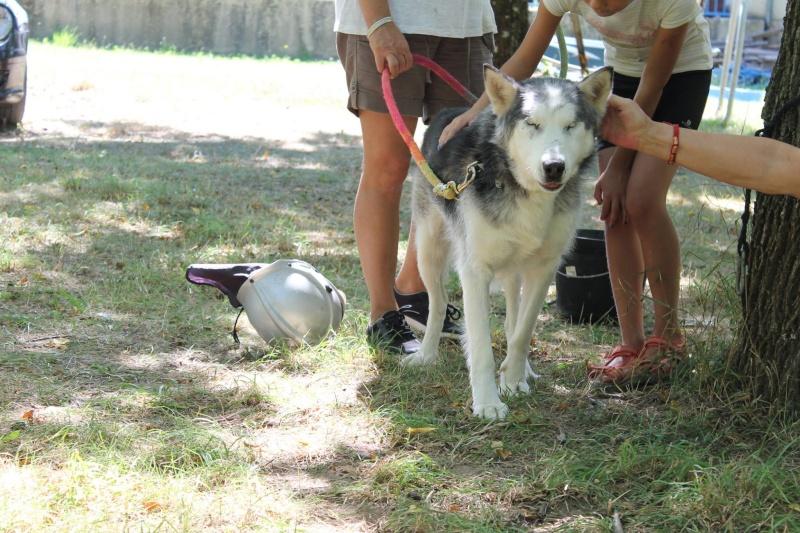 BLUE EYES  8ans, Husky sauvé de Roumanie ASSO65 - Page 3 10548710
