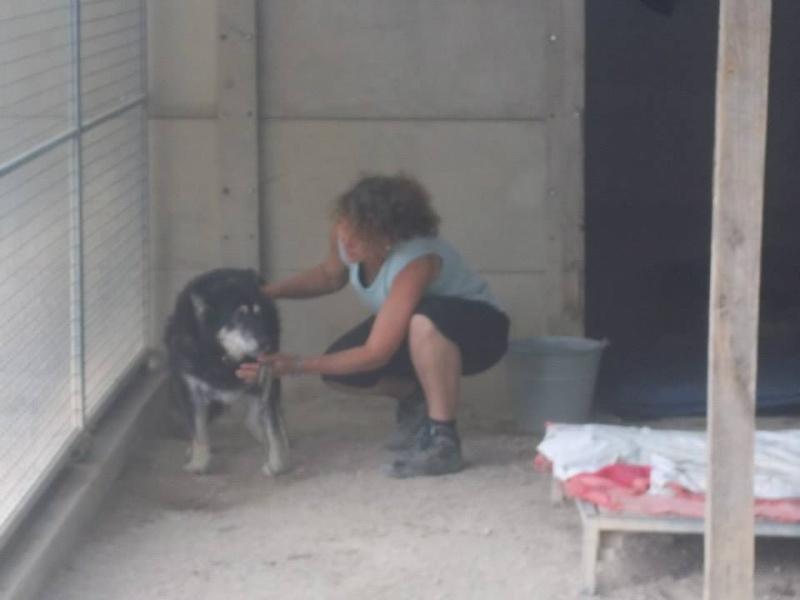 ULLA X Husky née en janvier 2001( f ) adoption uniquement REFU83  - Page 2 10600510