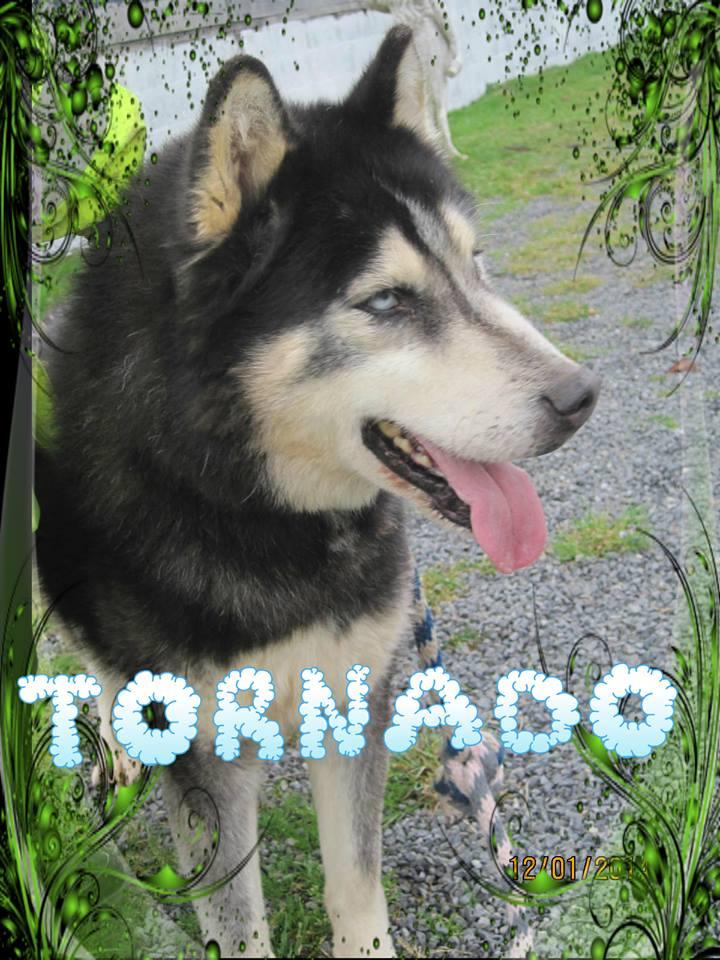 Tornado husky (m) 26 octobre 2002 REFU22 reste au refuge 10616610