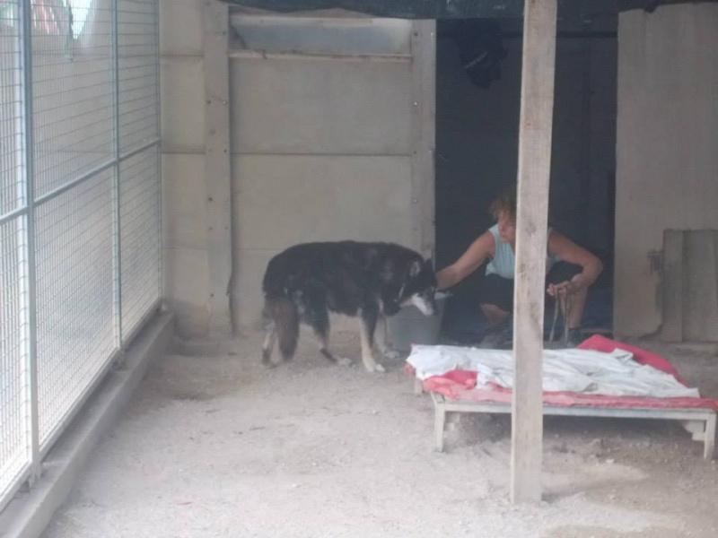 ULLA X Husky née en janvier 2001( f ) adoption uniquement REFU83  - Page 2 10628010