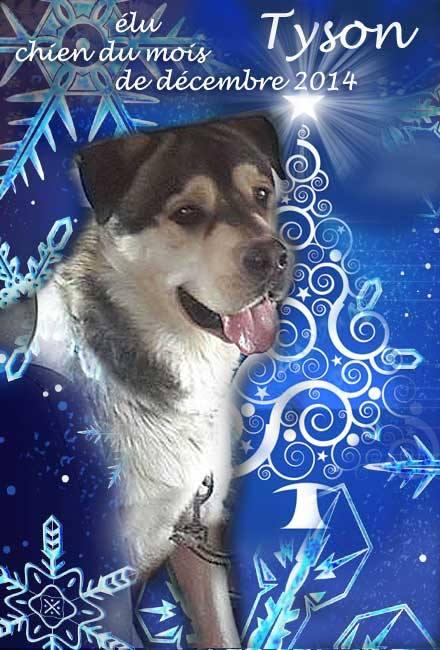TYSON x husky  labrador né 11/2012/ sociable joueur équilibré  REF78 ADOPTER - Page 2 15123710