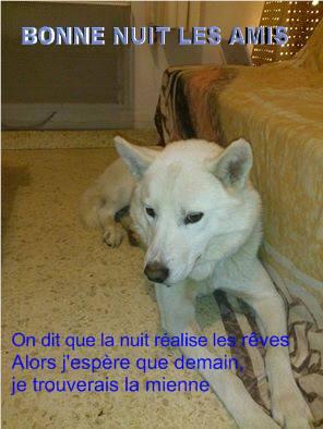 Balto type Husky ok chiens chats enfants ASSO46 ADOPTE 16227710