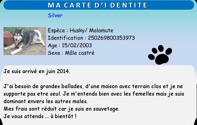 Silver Husky x Mala (m) 15/02/2003 ok femelles REFU29 Silver10