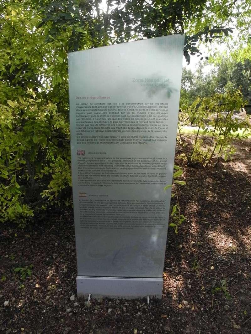 Paléosite de Saint Césaire (17) Dscn8616