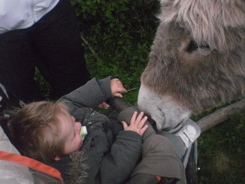 les petites oies née hier et mes autres animaux - Page 8 P5180011