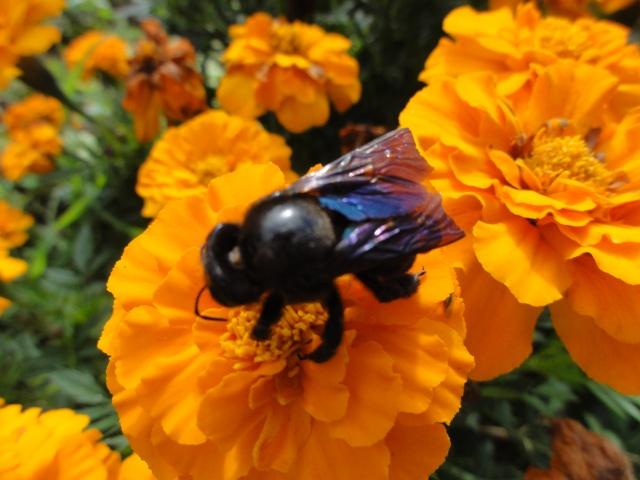 Les fleurs de nos jardins Dsc09612