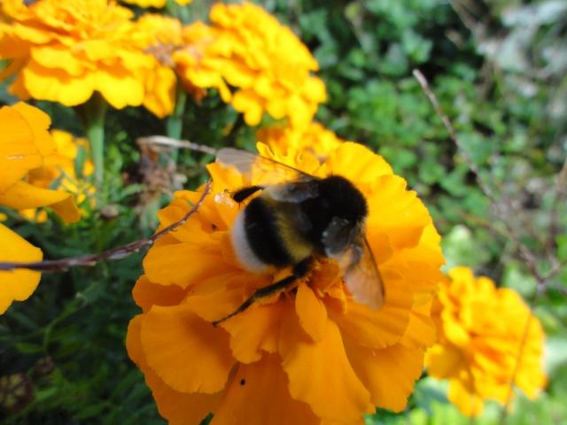 Les fleurs de nos jardins Dsc09613