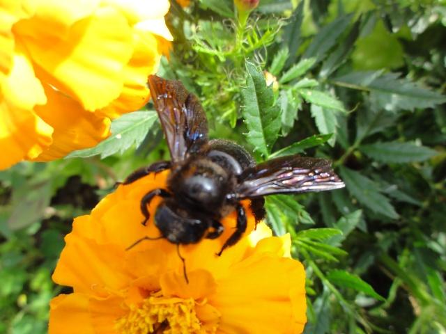 Les fleurs de nos jardins Dsc09710