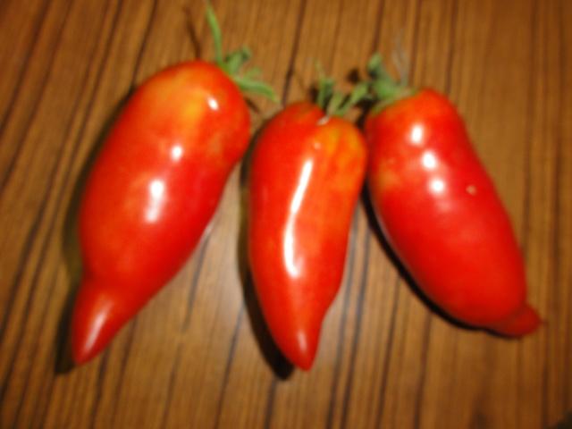 mes tomates  bizzares Tomate10
