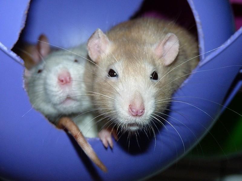 ❤ Les ratons de la St Valentin ❤ - Page 3 P1580312