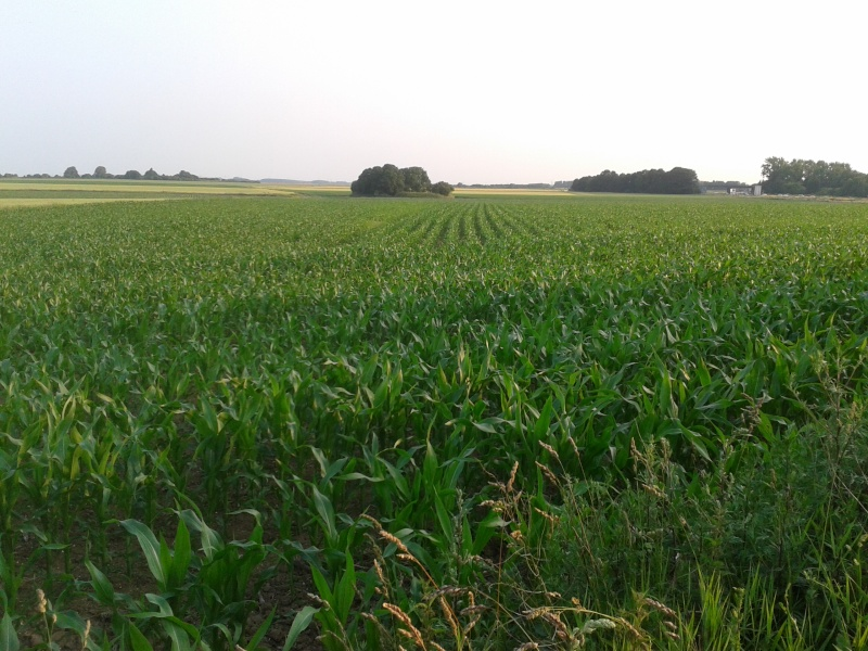 semis de maïs 2013  - Page 17 20130717