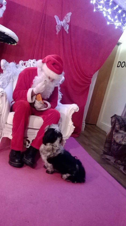 WE HAVE A WINNER OF THE CHRISTMAS PHOTO COMPETITION Santa_11