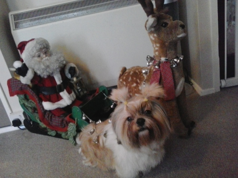 WE HAVE A WINNER OF THE CHRISTMAS PHOTO COMPETITION Tucker10