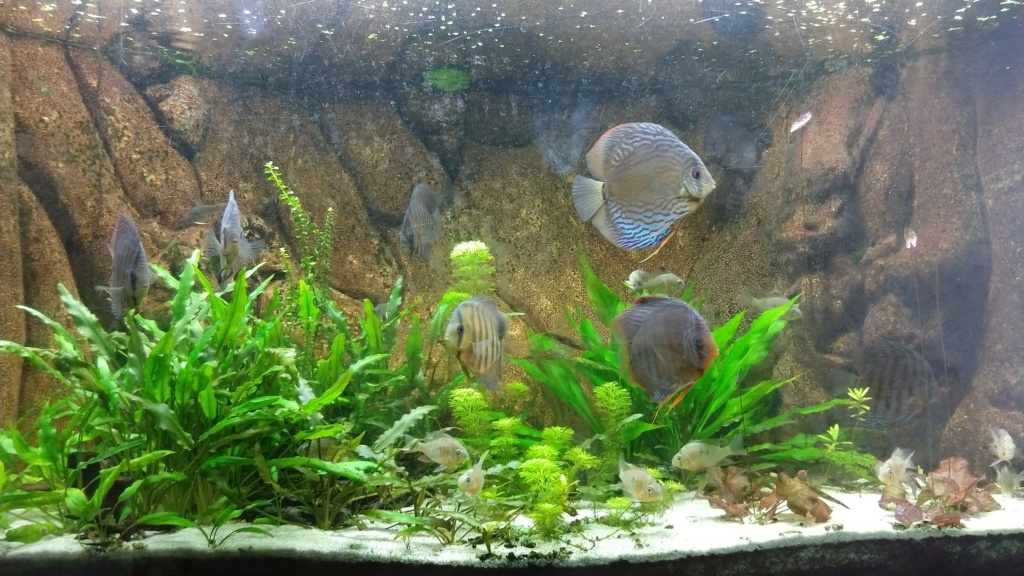 [Herpo] 590L discus/altispinosa ! - Page 6 Img_2027