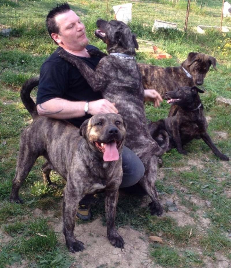 """chien de """"gaara"""" 10153110"""