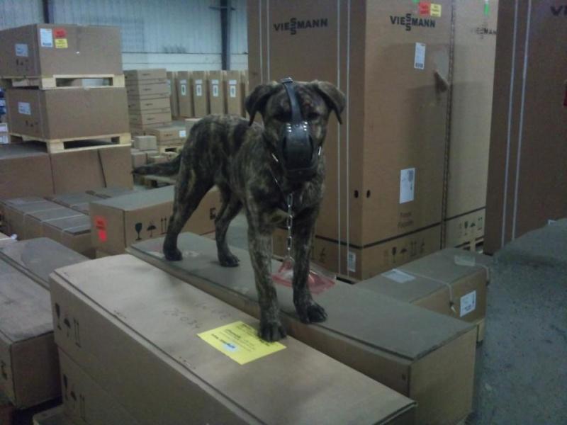 """chien de """"gaara"""" 40111210"""