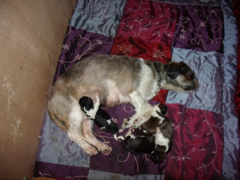 Naissance des 4 bébés de Gladys !! FÉLICITATIONS à Nini (la sage femme) et à la maman  Gedc4919