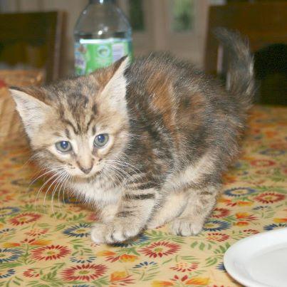 recherche FA/asso pour une quinzaine de chats qui risquent l'euthanasie 32038710