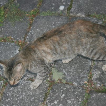 recherche FA/asso pour une quinzaine de chats qui risquent l'euthanasie 38561910