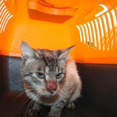 recherche FA/asso pour une quinzaine de chats qui risquent l'euthanasie 48092410