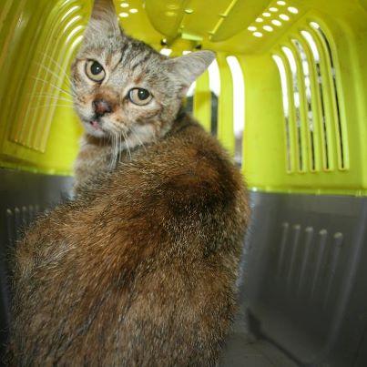 recherche FA/asso pour une quinzaine de chats qui risquent l'euthanasie 55713310