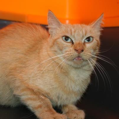recherche FA/asso pour une quinzaine de chats qui risquent l'euthanasie 64399710