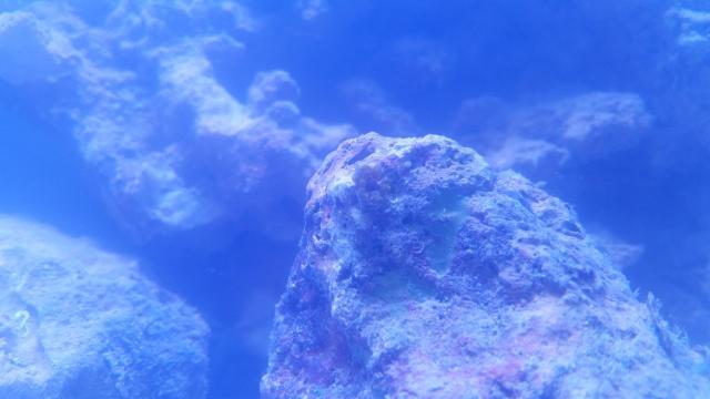 Mon premier aquarium eau de mer 52174610