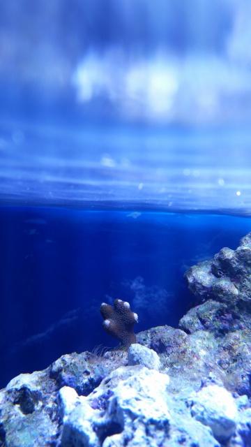 Mon premier aquarium eau de mer 57019510