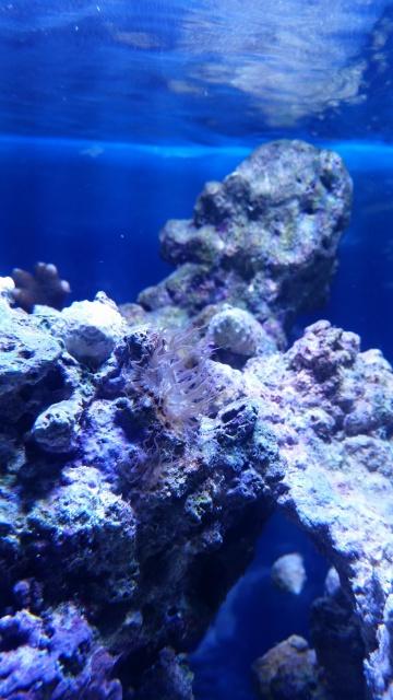 Mon premier aquarium eau de mer 86273910