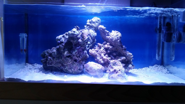 Mon premier aquarium eau de mer 94532911