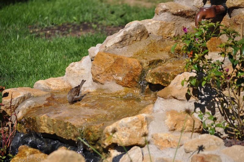 Création d'un bassin - Page 2 Dsc_0518